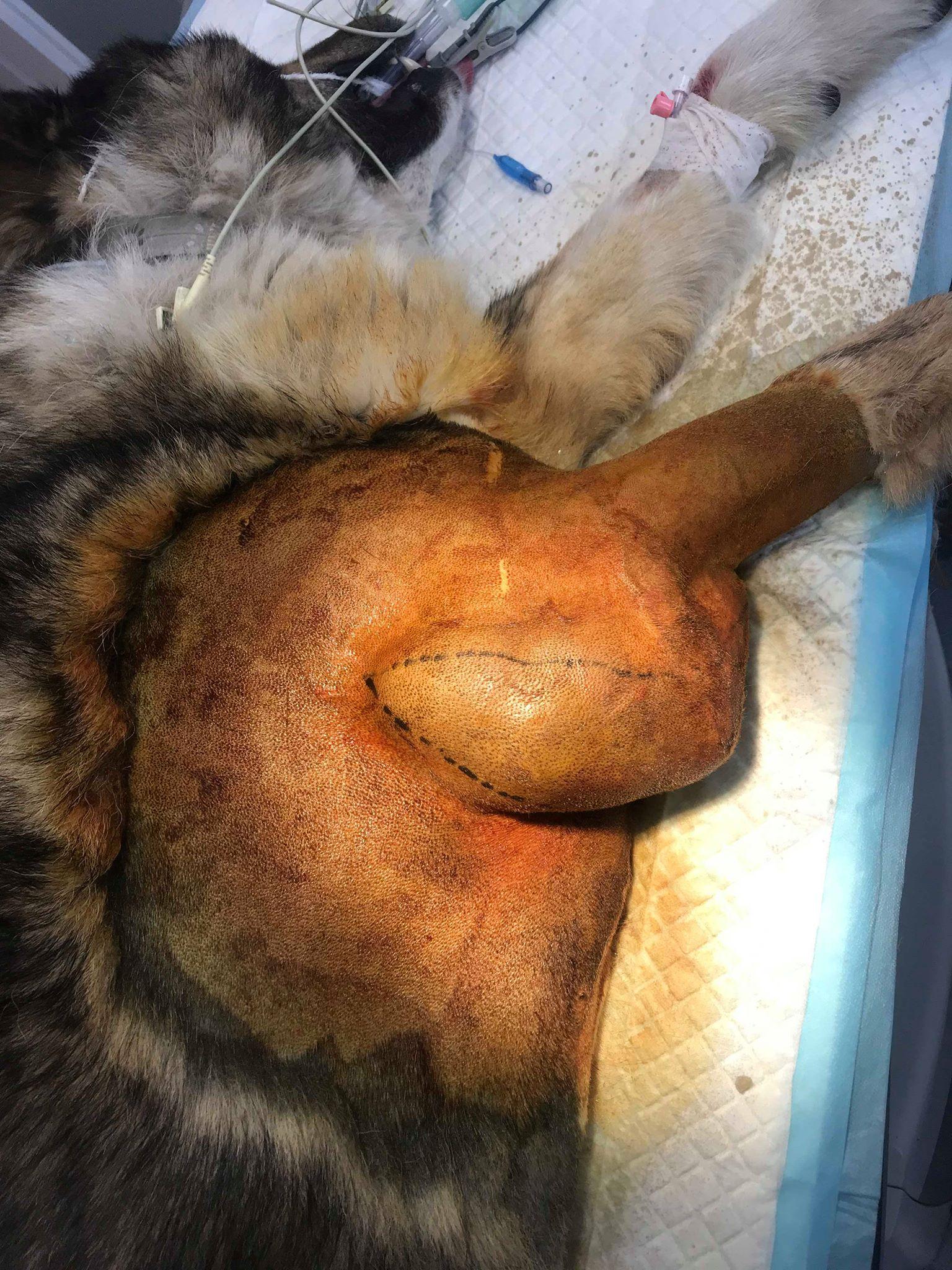operacja guza nygusa