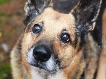 Pomoc dla psa Aresa